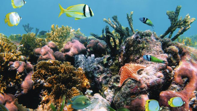 Coral reefs for snorkeling in Jamaica