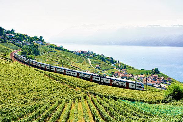 Train alongside a vineyard